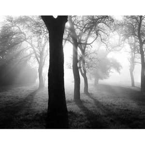 Trees in the fog I by Tom Weber 36x28:  Kitchen & Dining