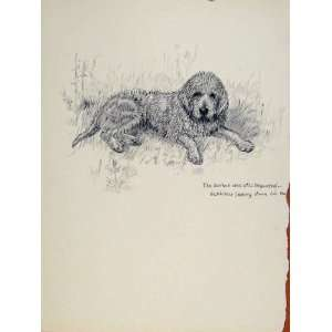 Guvnor Dog Hound Pet Disgusted Sketch Pencil Drawing: Home & Kitchen