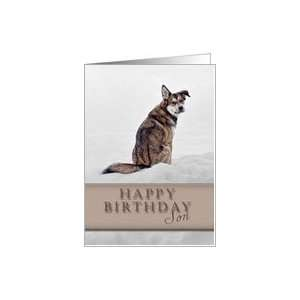 Happy Birthday Son, Dog in Snow Card: Toys & Games