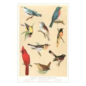 Common American Songbirds Premium Poster Print, 16x24