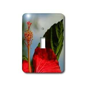 hibiscus, hibiscus rosa sinensis, plant, plants   Light Switch Covers