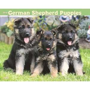 Just German Shepherd Puppies 2010 Wall Calendar Office