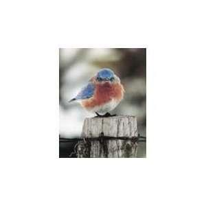Bluebird/10 Pack 3D Wood Magnet Artist Michael L Smith: Home & Kitchen