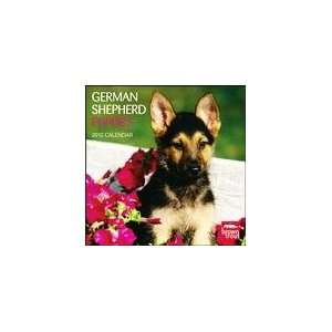 German Shepherd Puppies 2010 Wall Calendar Office Products