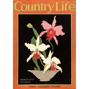 1927 Cover Country Life Spring Flowers Iris Gardening Planting
