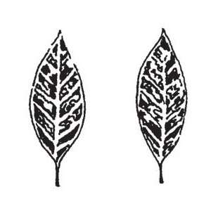 Penny Black Rubber Stamp 1.5X1.5 Twin Leaves; 3 Items